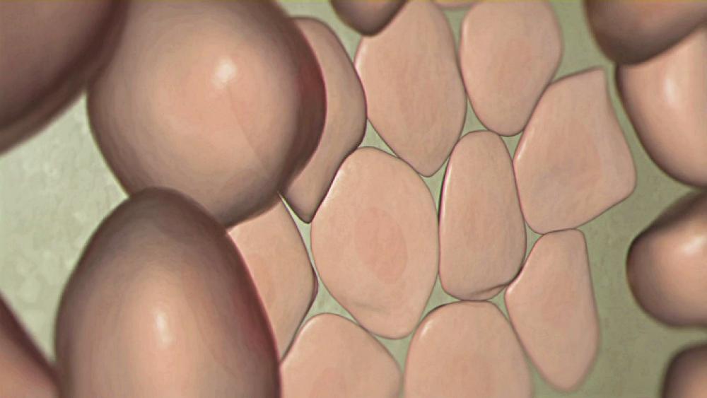 BioRap: Kapillargefäße aus dem Drucker