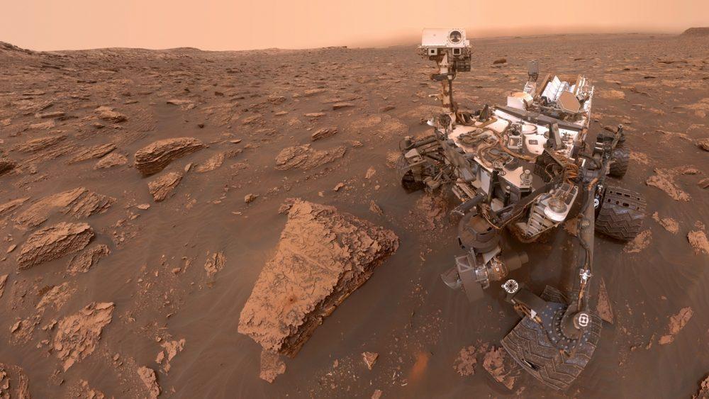 Rover, der Neugierige