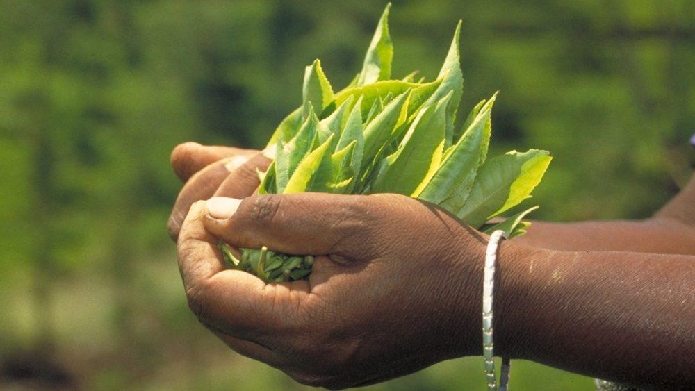 Genuss-Blätter